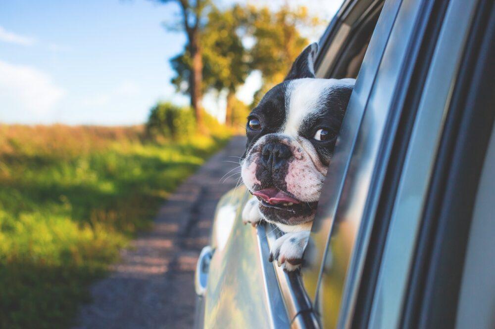 ペットと車